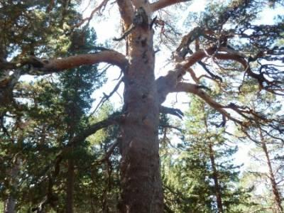Lagunas de Neila y Cañón del Río Lobos;nacimiento del río cuervo la barranca navacerrada bola de